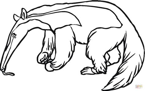 Anteater Coloring Page anteater 5 coloring page free printable coloring pages