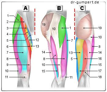 innere beinmuskulatur wie wird die oberschenkel vorderseite flach sport