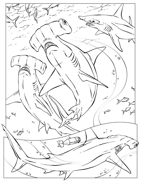 sharks a coloring book books shark coloring marine coloring pages