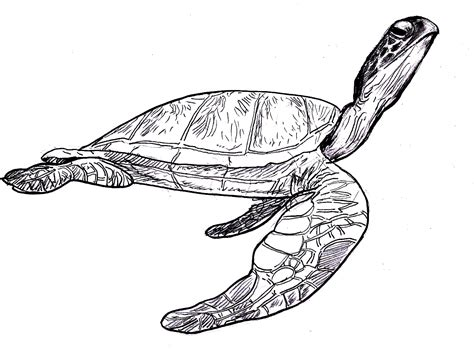 leatherback turtle coloring page sea turtle coloring pages 360coloringpages