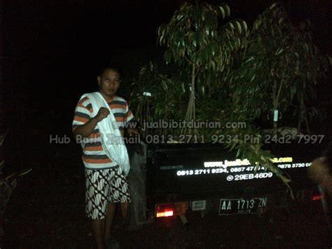 Bibit Durian Bawor bibit durian bawor kirim ke malang bibit durian montong