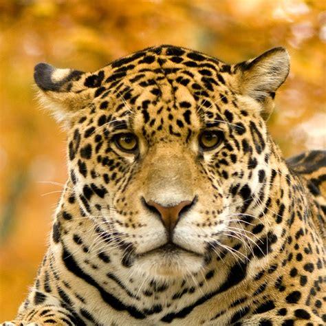 amazon rainforest animals rain forest animals of the amazon