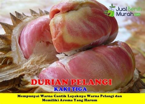 Harga Diskon Benih Tomat Ungu Indigo Maica Leaf Pack 20 durian pelangi 3 kaki jualbenihmurah