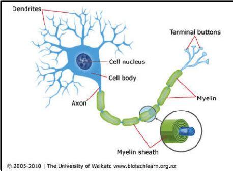curiocity curiocité stem cells and types of stem cells