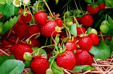 imagenes figurativas realistas de frutas im 225 genes arte pinturas bodegones frutas tropicales