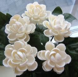 5 ark shell seashell flowers flickr photo sharing