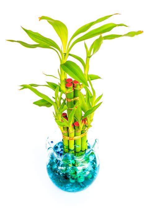 plants to keep in bathroom 100 plants in bathroom according to vastu vastu