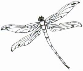 dragonfly tattoo design liza paizis original art and jewelry