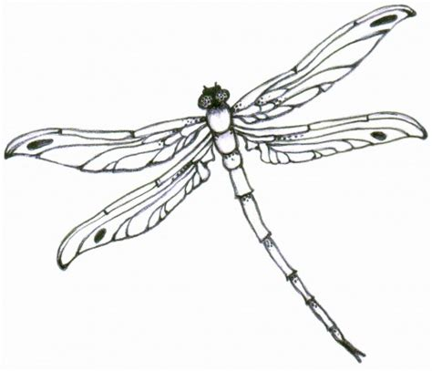 best dragonfly outline 5039 clipartion com