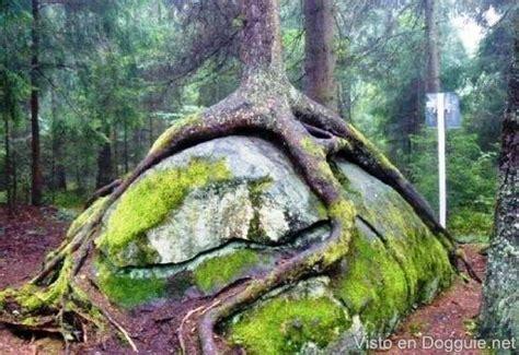 Ver Imagenes Insolitas Naturaleza | cosas raras curious things pinterest posts and