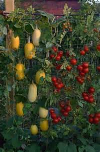Vertical Garden Vegetables 20 Vertical Vegetable Garden Ideas Home Design Garden