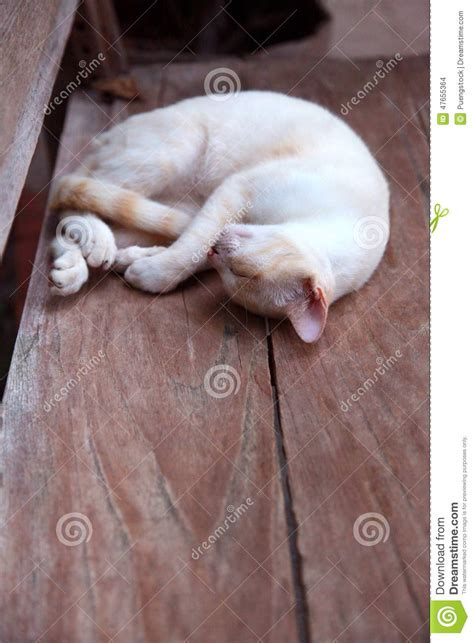 sleeping on hardwood floor sleep cat stock photo image 47655364