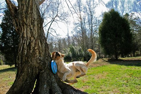 Doggie From Tree by Meets Tree While Fetch In The Park With A Frisbee