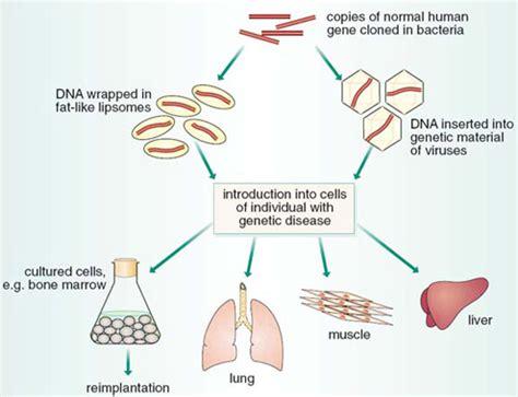 gene therapy flowchart gene therapy flowchart create a flowchart