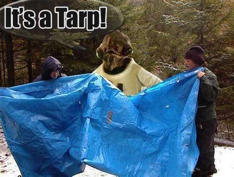 Tarp Meme - it s a tarp