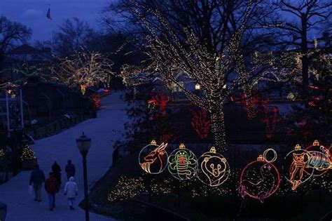 toledo lights at the zoo toledo zoo to turn on its light show the blade