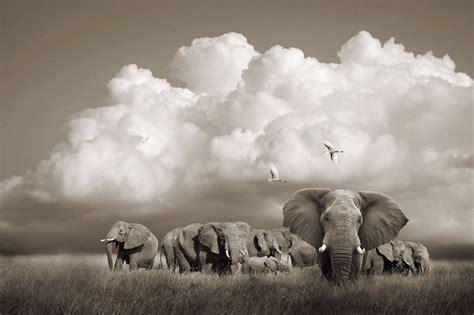 imagenes artisticas de animales las mejores fotos de fauna africana por horst klemm