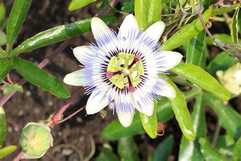 Pflanzen Pralle Sonne by Pflanzen F 252 R Die Pralle Sonne Diese Balkon Und