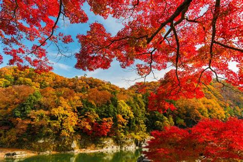 complete fall color  autumn leaf viewing guide