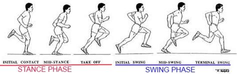 late swing hamstring training for sprinting speed andrew sacks sports performance