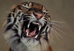 membuat gif tulisan berjalan download animasi harimau bergerak alamendah s blog