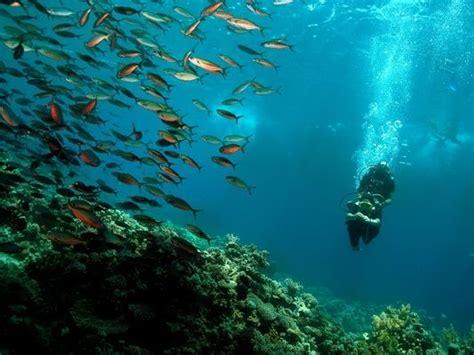 reef oasis dive club diving photo gallery sharm el sheikh reef oasis dive club