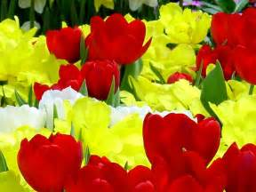 New Beautiful Flowers - indian celebrity zoon new beautiful flowers wallpaper