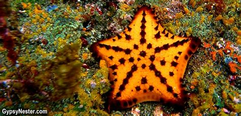 chocolate starfish meaning a week in the life of the gypsynesters galapagos islands