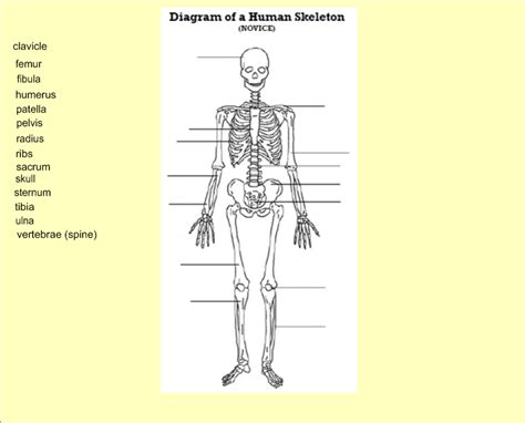 skeleton diagram quiz bone diagram quiz 28 images skeletal system diagram