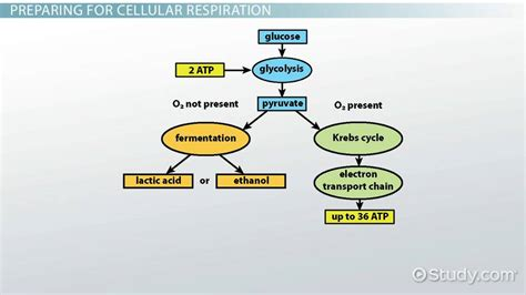 design lab on respiration process of cellular respiration in bacteria video