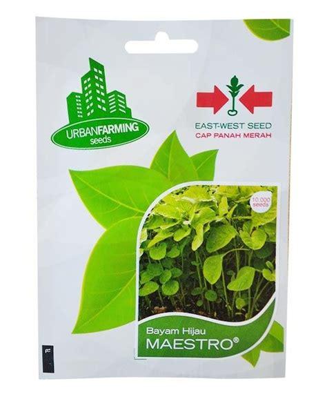 Murah Benih Bayam Hijau Maestro benih bayam hijau maestro panah merah jualbenihmurah