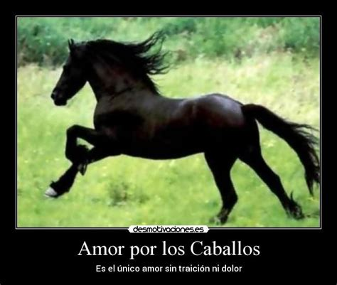 mujer que hace el amor con caballo amor por los caballos desmotivaciones