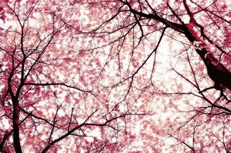 giardino dei ciliegi la domenica di vicenza settimanale di politica e