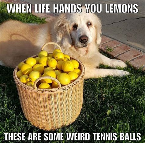 can dogs eat lemons 15 senior dogs dropping words of wisdom like only the elderly can barkpost