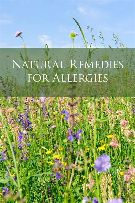 remedies for allergies remedies for allergies aja health