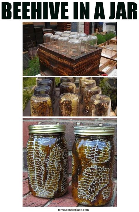 Backyard Honey by Diy Beehive In A Jar Backyard Honey With This Easy