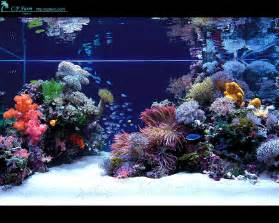NEW 125 Gallon Build   Page 7   The Reef Tank