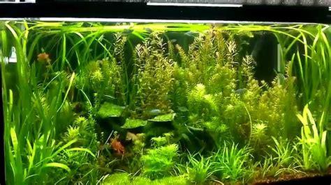 aquascape youtube aquascape jungle style youtube