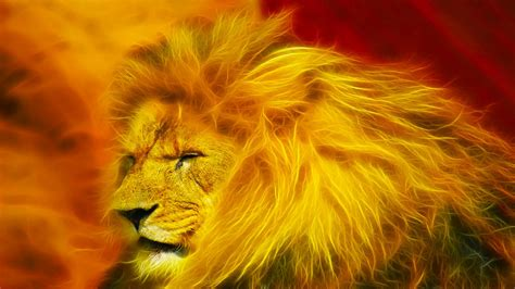 wallpaper abstract lion lion hd wallpapers lion hd pictures free download hd