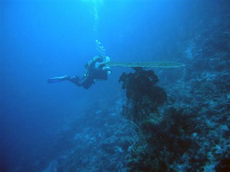 top 5 dive sites in egypt deeperblue com