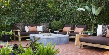 patio screening plants 10 privacy plants for screening your yard in style