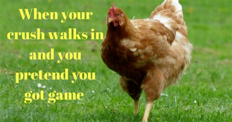 chicken meme 11 chicken memes that prove we can totally relate to chickens