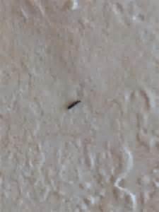 kleine schwarze tiere im bett kleine schwarze k 228 fer in meinem bett insekten