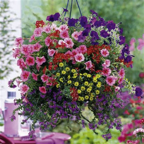 Flowers For Hanging Planters by Bumper Basket Collection 36 Our Selection Flower Collections Flower Plants Flowers