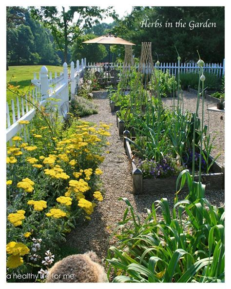 Planning Vegetable Garden Planning Ideas For Your Vegetable Garden A Healthy