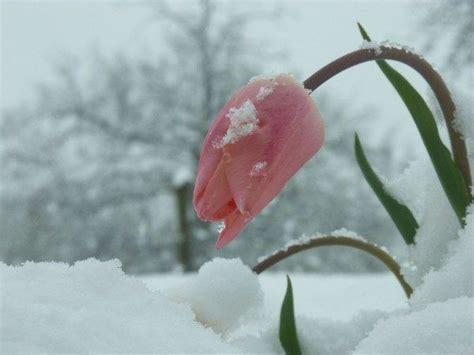 imagenes flores invierno cu 225 les son las flores de invierno erenovable com