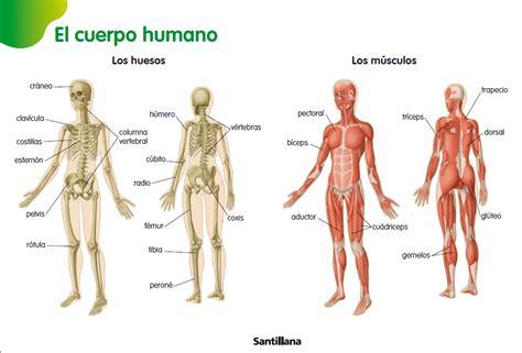 el cuerpo humano 848016977x 2 la estatua viviente