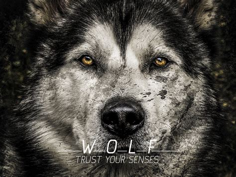 wolf wallpaper pinterest wolf backgrounds quotes quotesgram