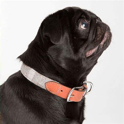 pug collars uk best collars for pugs pug collars