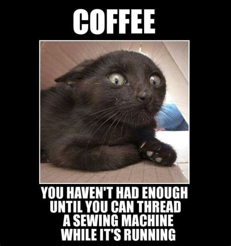 Coffee Memes Funny - best 25 coffee humor ideas on pinterest morning coffee